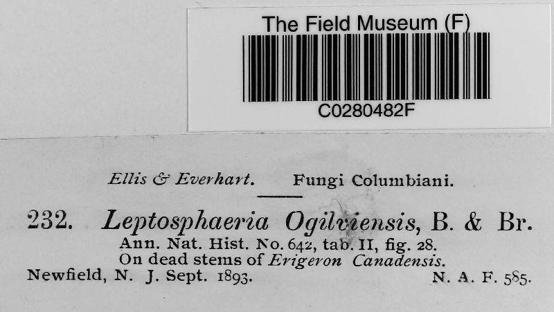 Leptosphaeria ogilviensis image