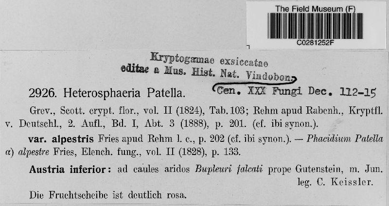 Heterosphaeria alpestris image