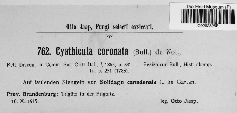 Crocicreas coronatum image