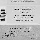 Image of Calocladia comata