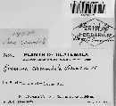 Image of Puccinia circumdata
