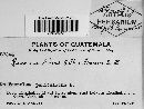 Image of Puccinia dolosa