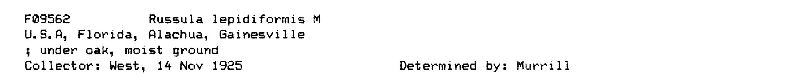 Russula lepidiformis image