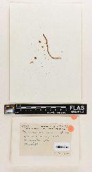Pluteolus floridanus image