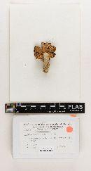 Russula ferrotincta image