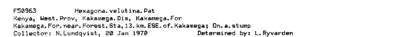 Hexagonia velutina image