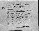 Gyroporus subalbellus image
