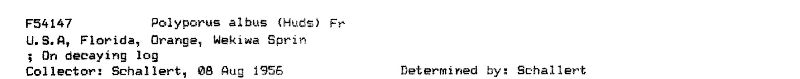 Polyporus albus image