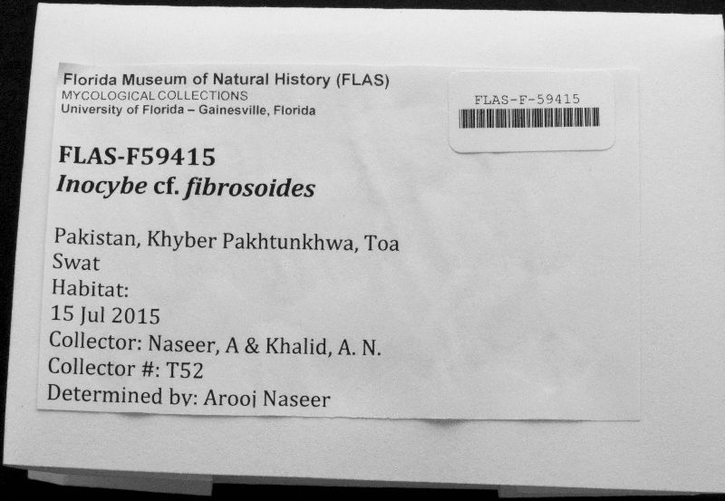 Inocybe fibrosoides image