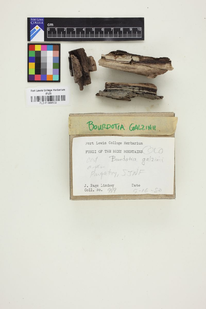 Exidiopsis galzinii image