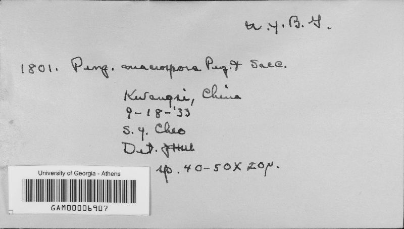 Penzigia macrospora image
