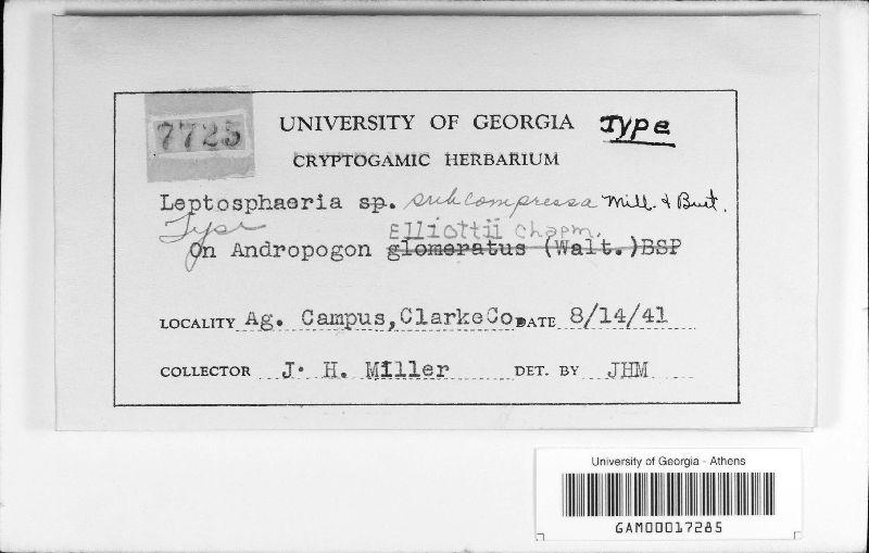 Leptosphaeria subcompressa image