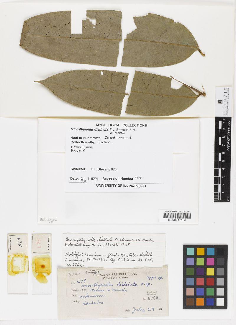 Microthyriella distincta image