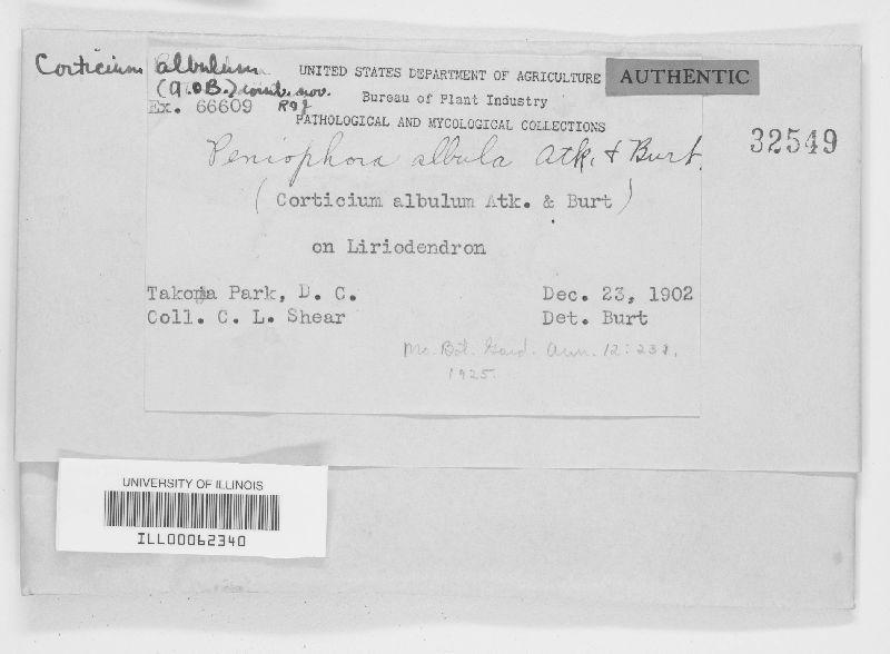 Peniophora albula image
