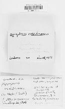 Hygrophorus roseobrunneus image