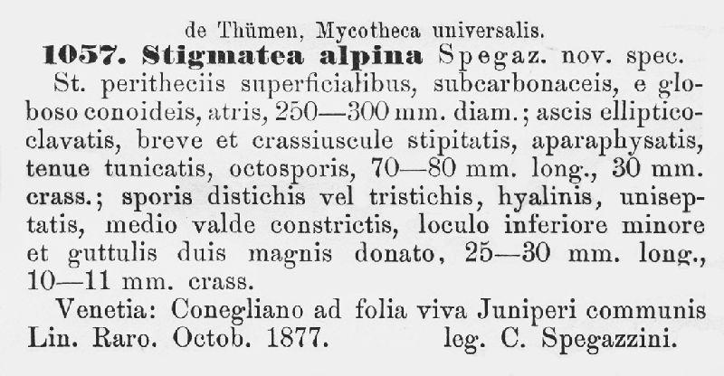 Stigmatea alpina image