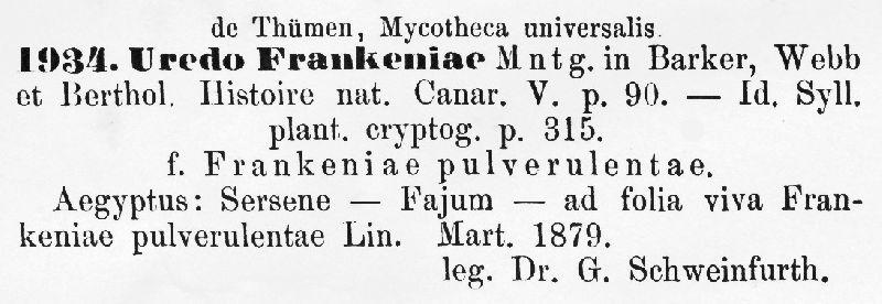 Uredo frankeniae image