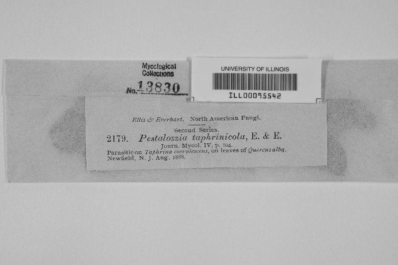 Pestalotia taphrinicola image