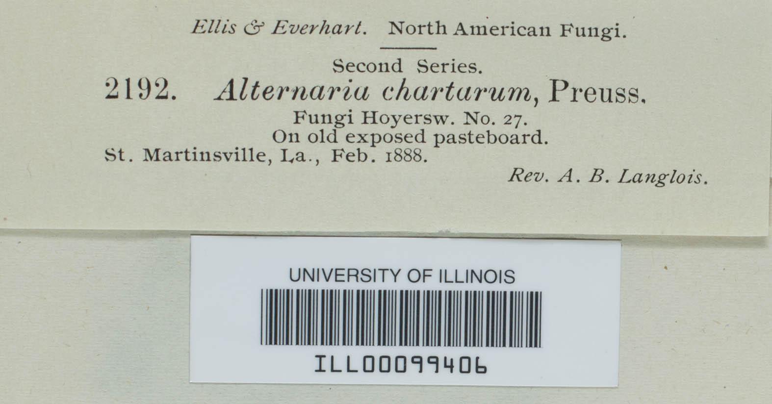 Ulocladium chartarum image