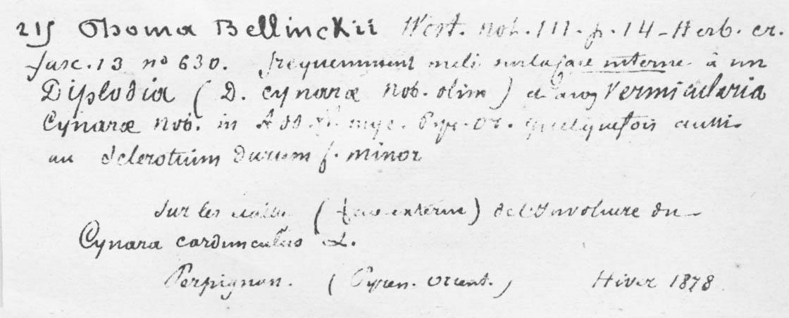 Phoma bellynckii image