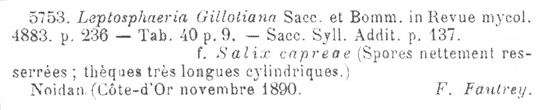 Leptosphaeria gillotiana image