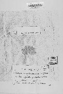 Leptosphaeria praetermissa image