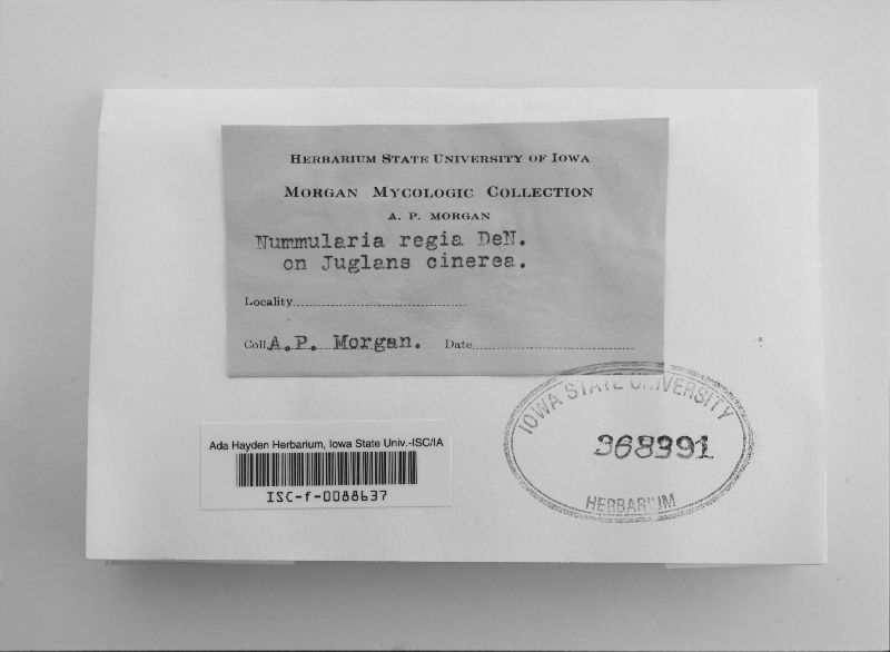 Biscogniauxia mediterranea image