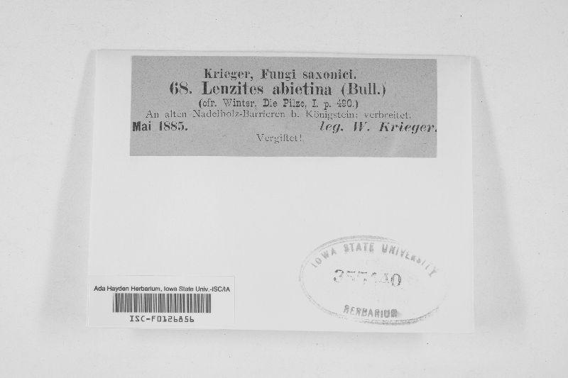 Gloeophyllum abietinum image
