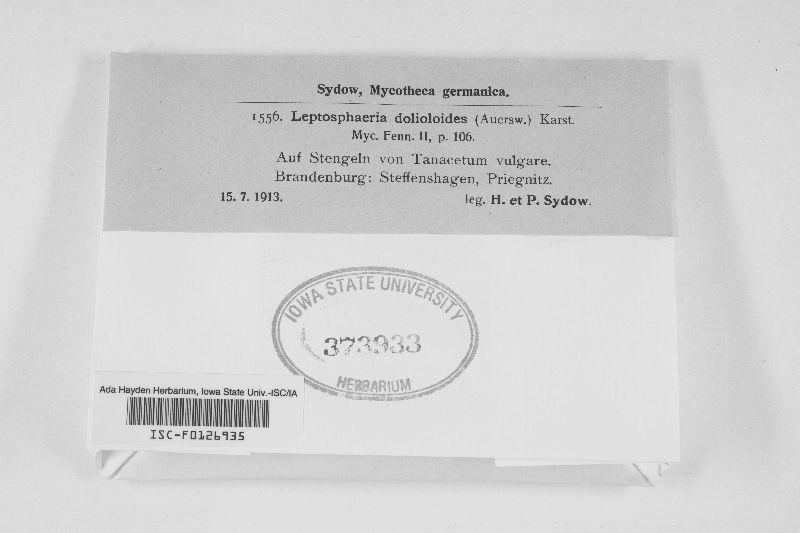 Leptosphaeria dolioloides image