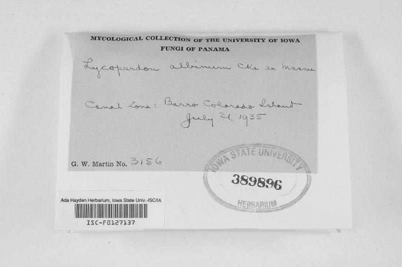 Lycoperdon albinum image
