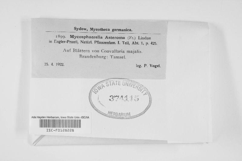 Mycosphaerella asteroma image