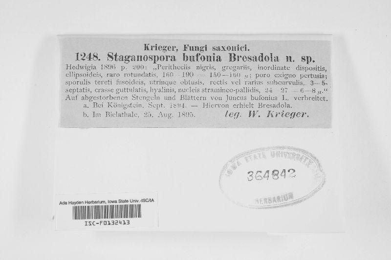 Stagonospora bufonia image