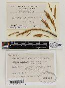 Parksia libocedri image