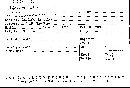 Jahnoporus hirtus image