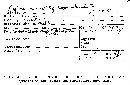 Xylaria apiculata image
