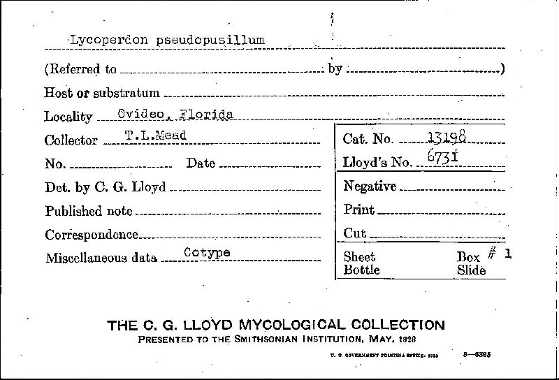 Lycoperdon pseudopusillum image