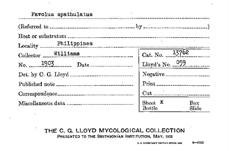 Royoporus spathulatus image