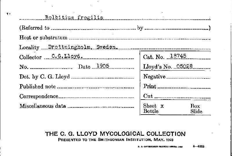 Bolbitius fragilis image