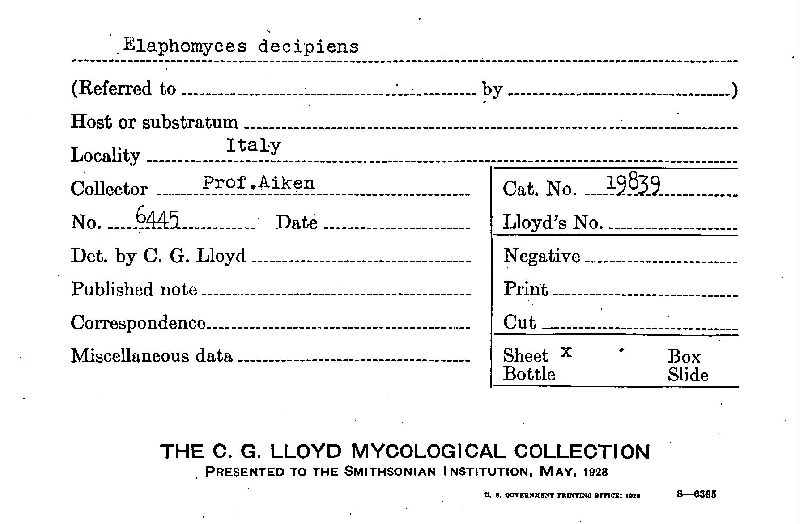 Elaphomyces decipiens image