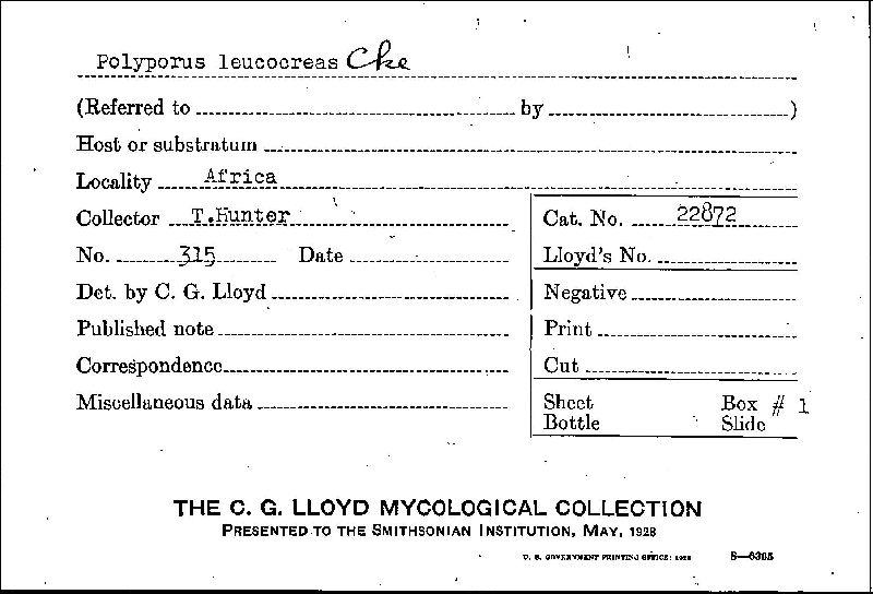 Polyporus leucocreas image