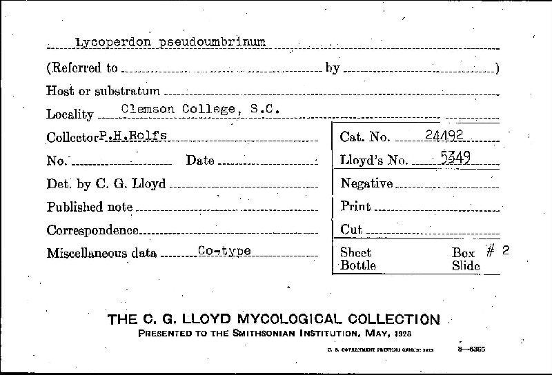 Lycoperdon pseudoumbrinum image