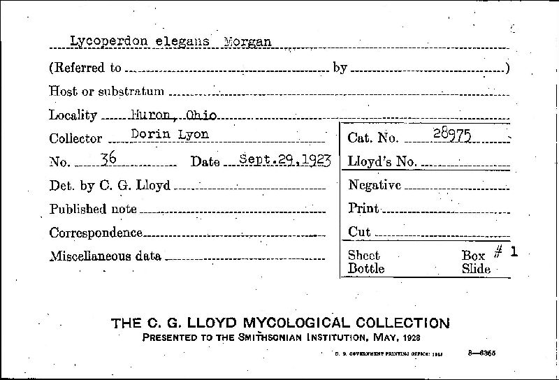 Lycoperdon elegans image