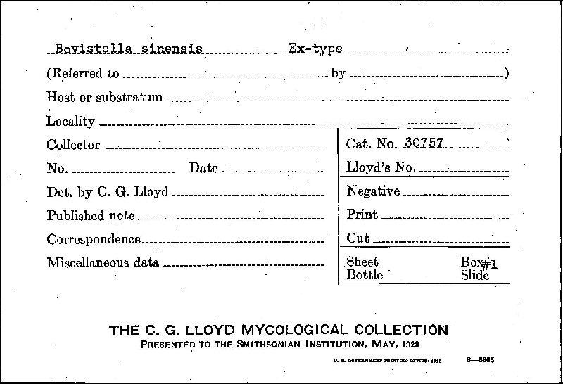 Bovistella sinensis image