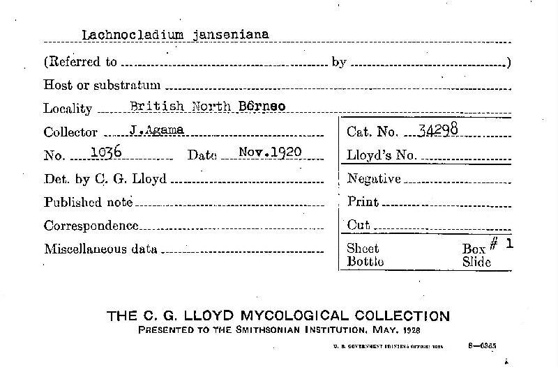 Lachnocladium janseniana image