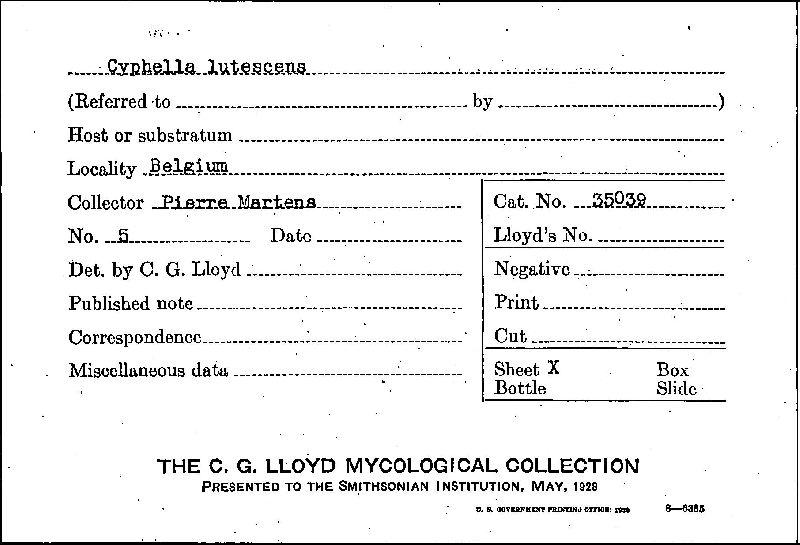 Cyphella lutescens image