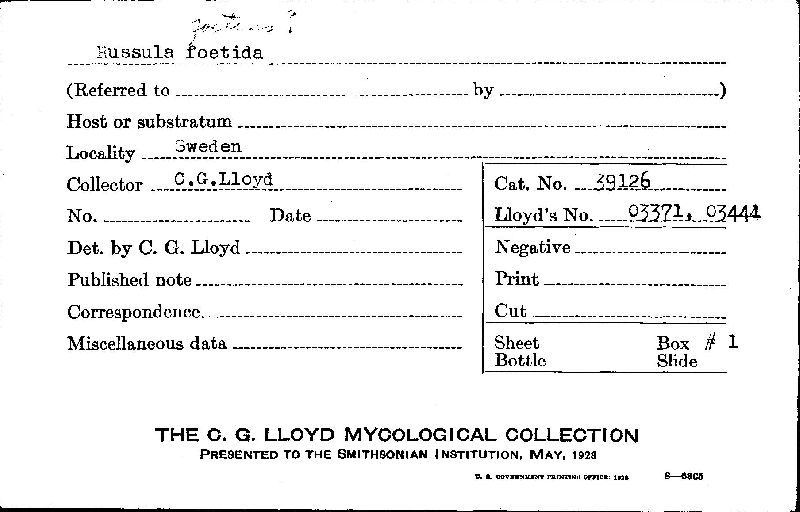 Russula foetida image