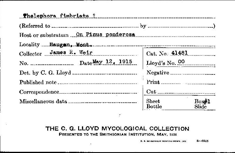 Phlebiopsis image