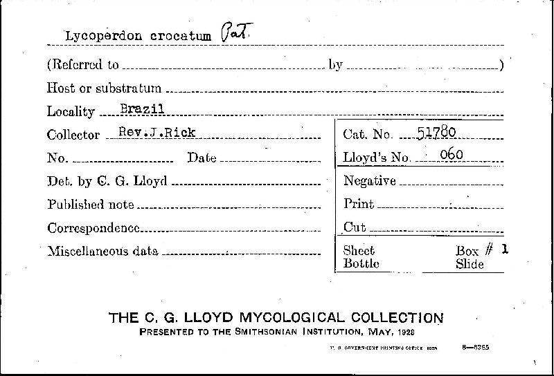Lycoperdon crocatum image