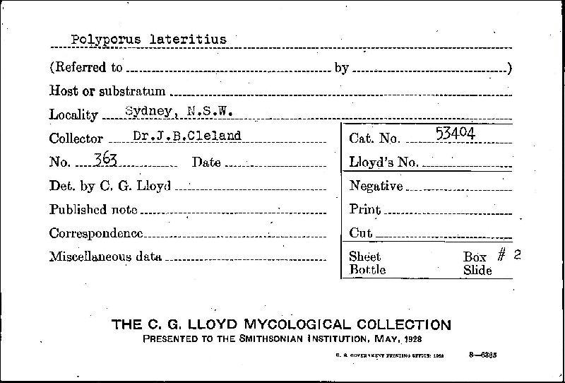 Polyporus lateritius image