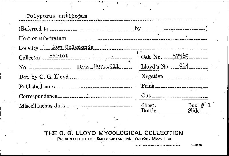Polyporus antilopus image